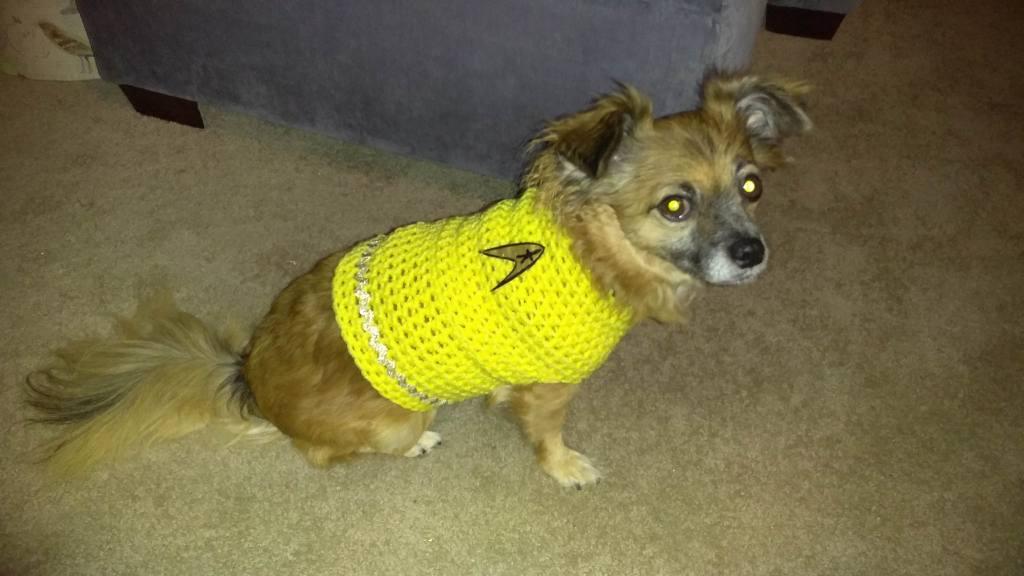 cute dog in crochet captain kirk costume