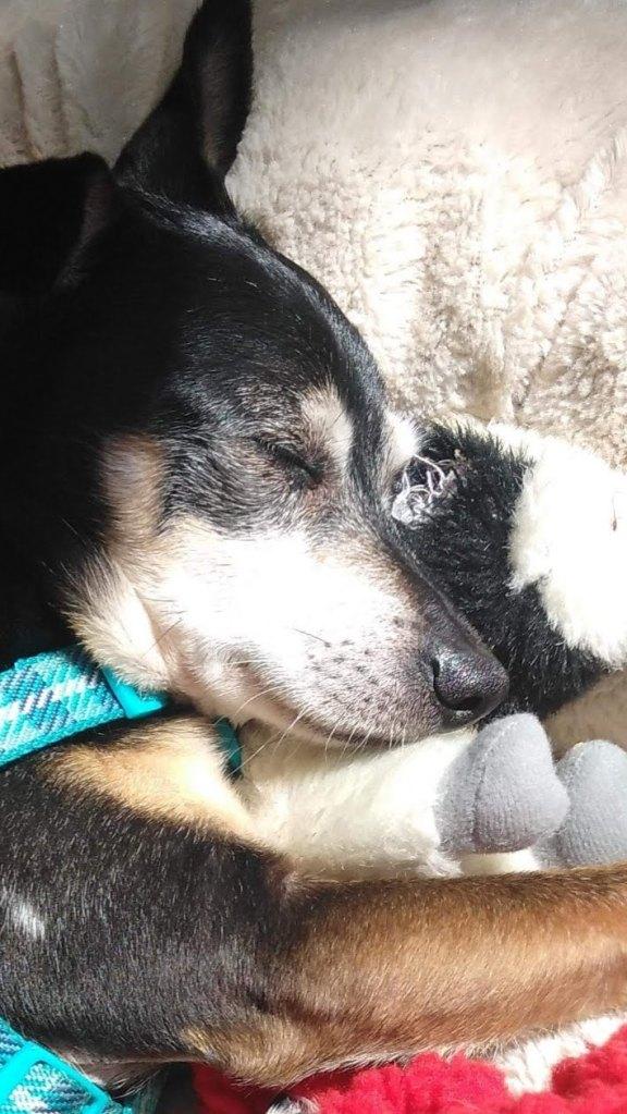 dog cuddling stuffed animal