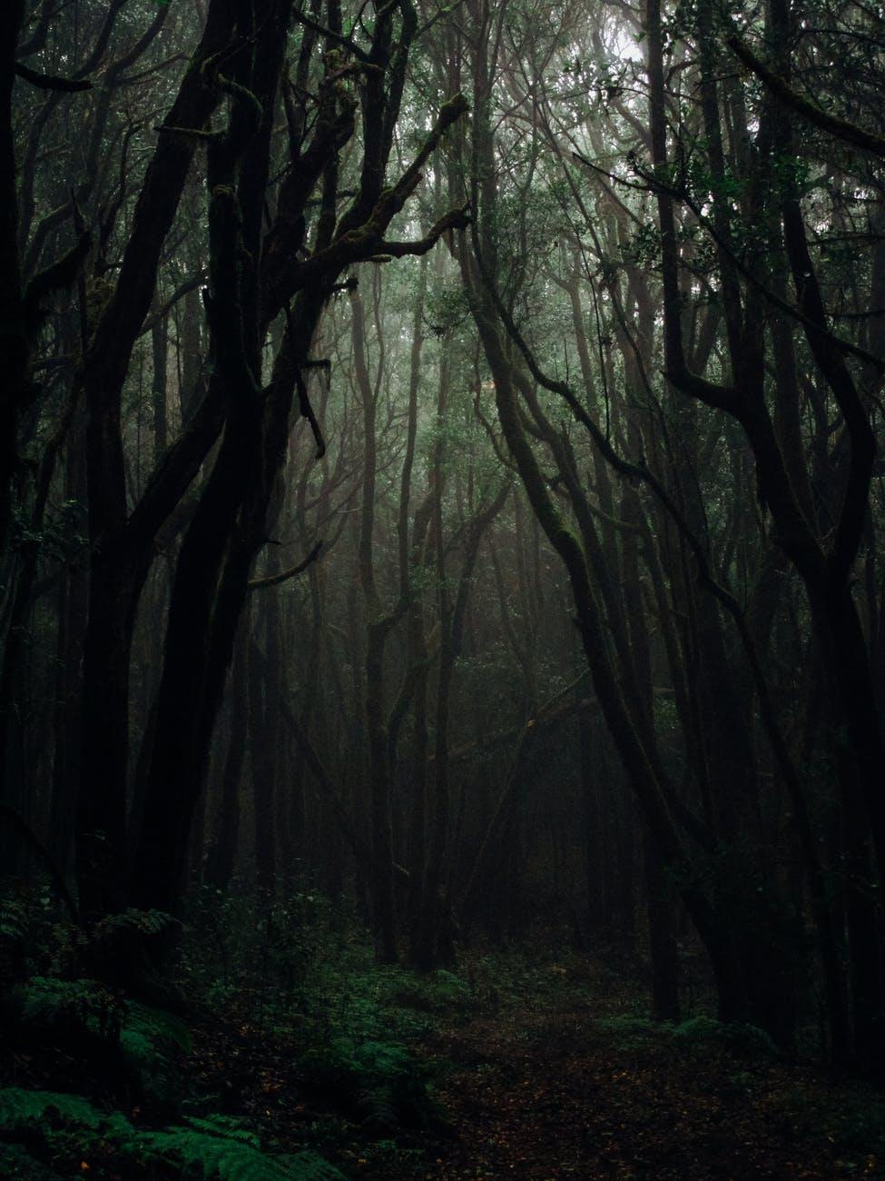 dark dense forest