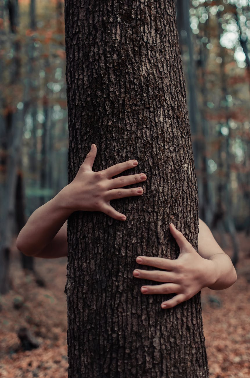 arms hugging tree in the woods