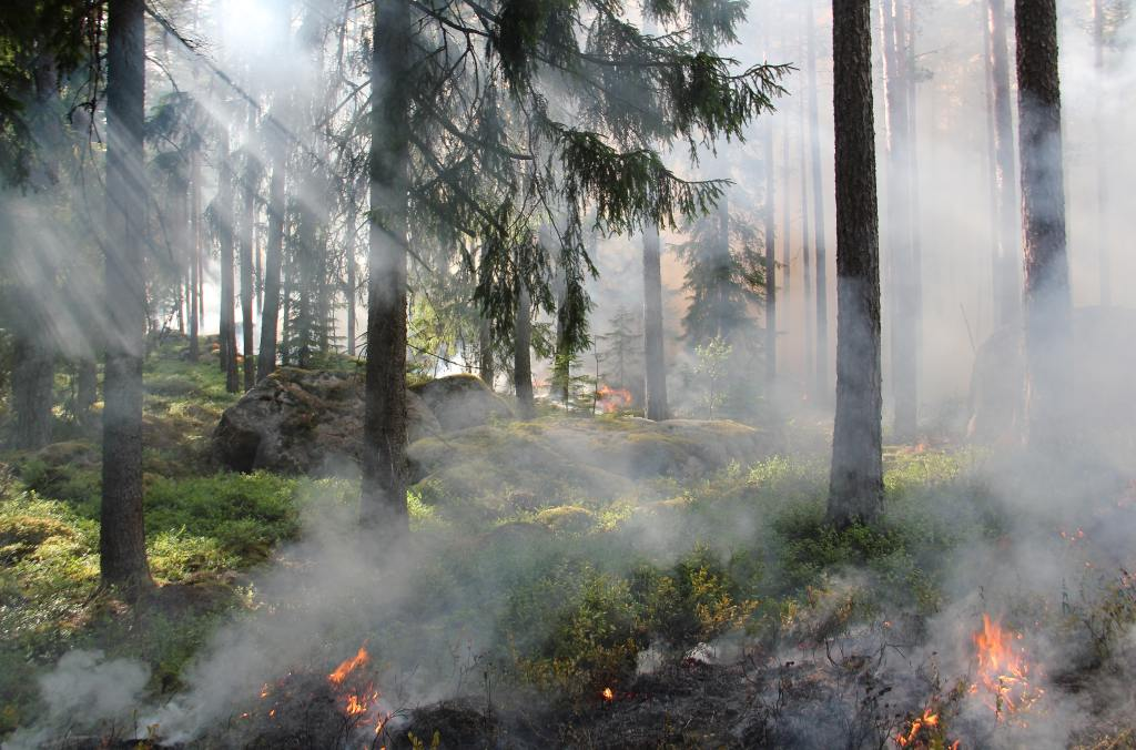 burning forest grass and trees smoke