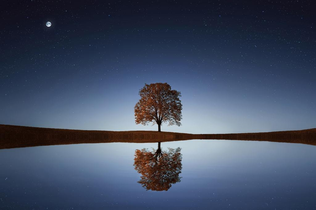 tree with moon in night sky by water