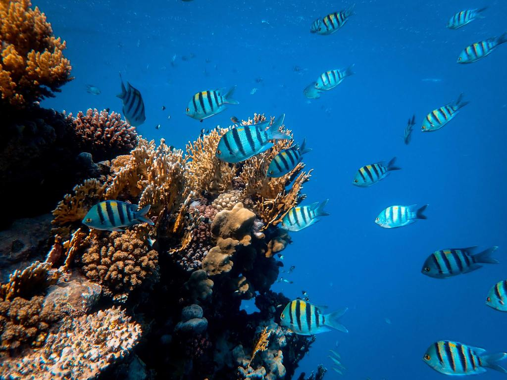 coral reef with blue ocean background and fish swimming