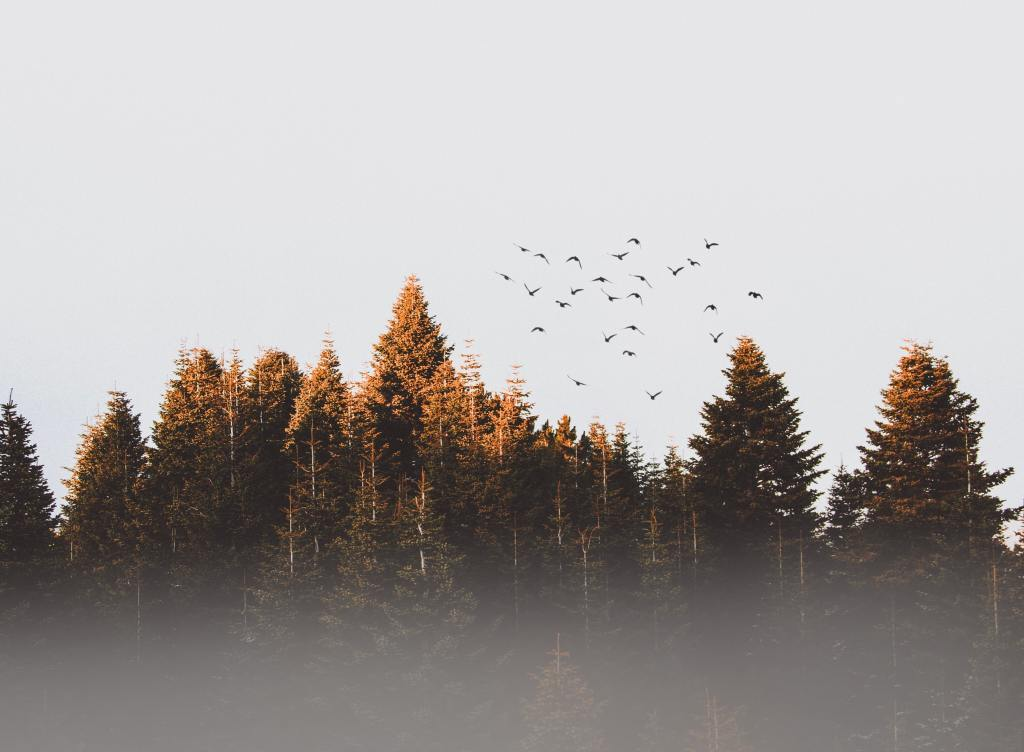 birds flying into the sky out of the woods
